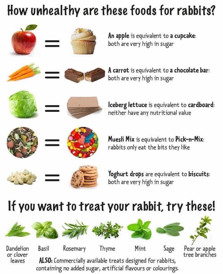 Healthy rabbit food advice at Manor Farm Vets Warminster